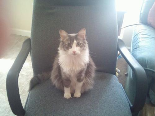 猫咪 Merlin 的图像