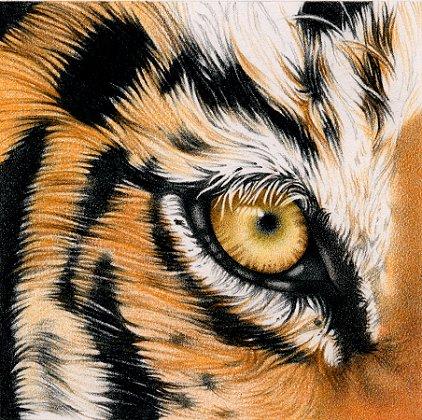 tigerteam