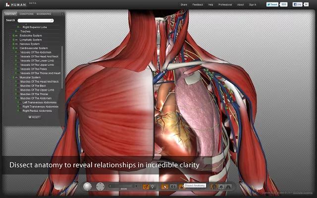 BIODIGITAL HUMAN(3D解剖)