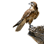 Python 框架 Falcon Framework