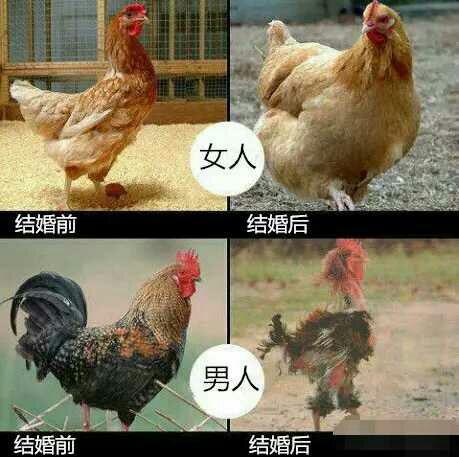 http://static.oschina.net/uploads/space/2015/0902/130758_M0ym_553243.jpg