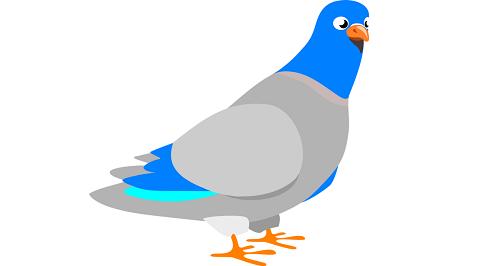 用信鸽来解释 HTTPS(HTTPS explained with carrier pigeons)