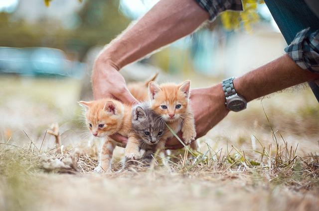 kittens-4020199_640.jpg