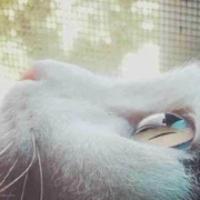 林湾村龙猫