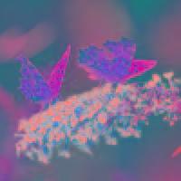蝴蝶和向日葵