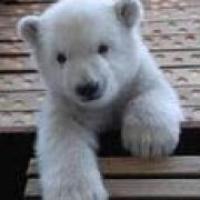 北极熊js