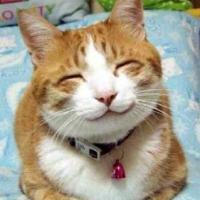 贪睡猫仙mosen