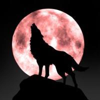 狼来了而已
