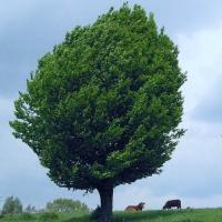 菩提树下乘凉