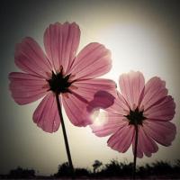 盛开的小花