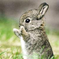 愤怒的小兔