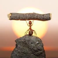 奋斗中的蚂蚁