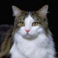 北漂的大尾巴老猫