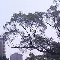 yuanyuan_186